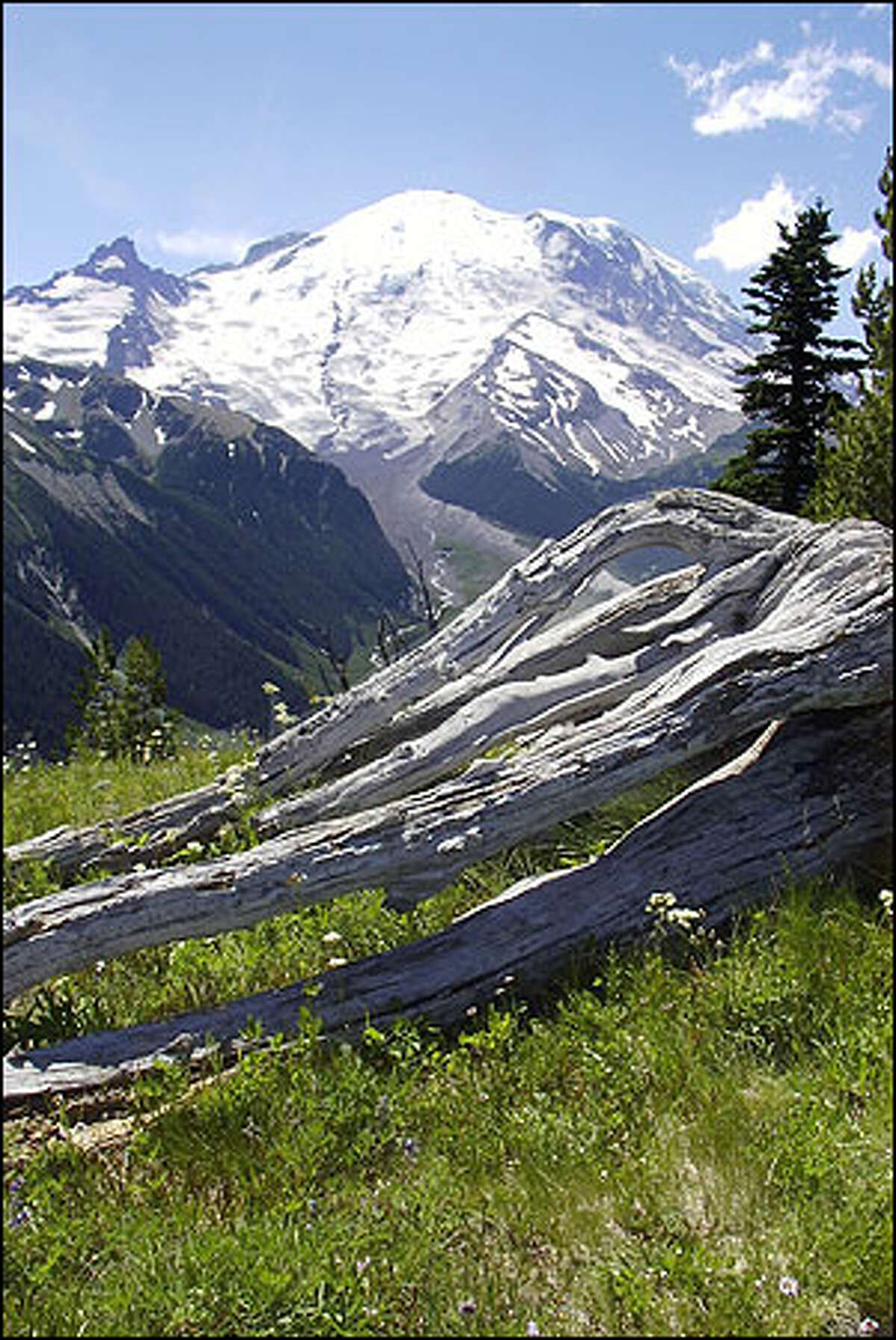 Mount Rainier and the gleaming expanse of the Emmons Glacier fill the horizon in this view from a high-country meadow near Sunrise.