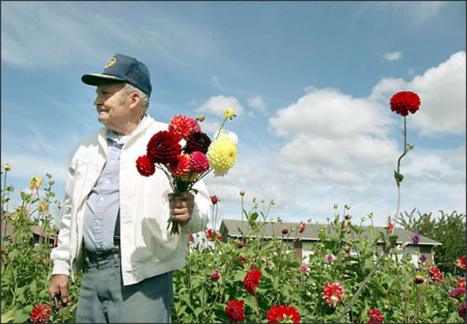 For his stand in Burlington, Bob Fox makes a bouquet from flowers he grows on land where he once raised calves. Photo: Meryl Schenker/Seattle Post-Intelligencer