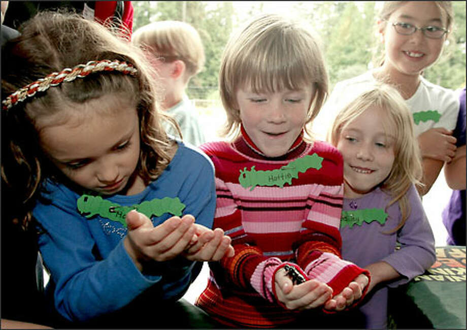 "Lake Forest Park Elementary second-graders Haley Magaoay, left, and Hattie Stendera, center, react yesterday as they hold 3-inch-long Madagascar cockroaches. Looking on is Bailey Mersereau, right, and Dana Matsunami, upper right. The bugs came courtesy of the Smithsonian O. Orkin Insect Safari. The traveling exhibit is housed in a 53-foot mobile trailer that is filled with interactive displays and scientific facts. ""The kids loved it,"" said a teacher. Photo: Gilbert W. Arias/Seattle Post-Intelligencer"