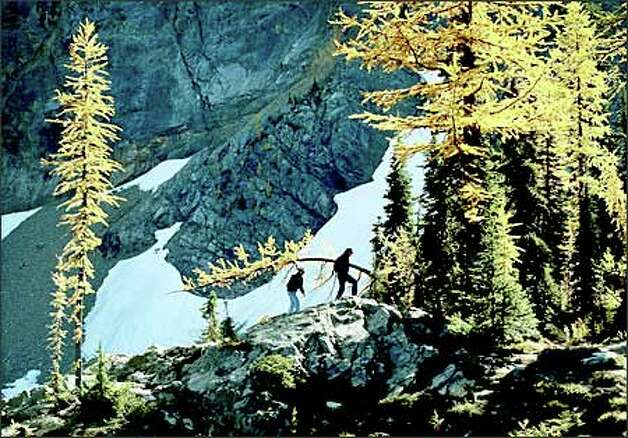 Les and Jolene Lovett of Bowling Green, Ky., hike past larch trees along the trail to Blue Lake near Washington Pass Overlook. Photo: Dan DeLong/Seattle Post-Intelligencer