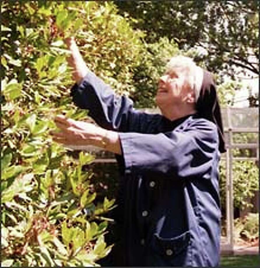 """Scores of readers recognized the """"hitchhiking nun"""" when her picture appeared in the Seattle P-I in 1997 with a rhodie bush she saved from construction for KeyArena. Photo: P-I FILE"""