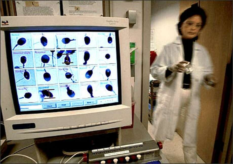 Connie Pete, a research technician at the University of Washington, carries specimens to analyze while her computer displays a study of morphology. Photo: Renee C. Byer/Seattle Post-Intelligencer