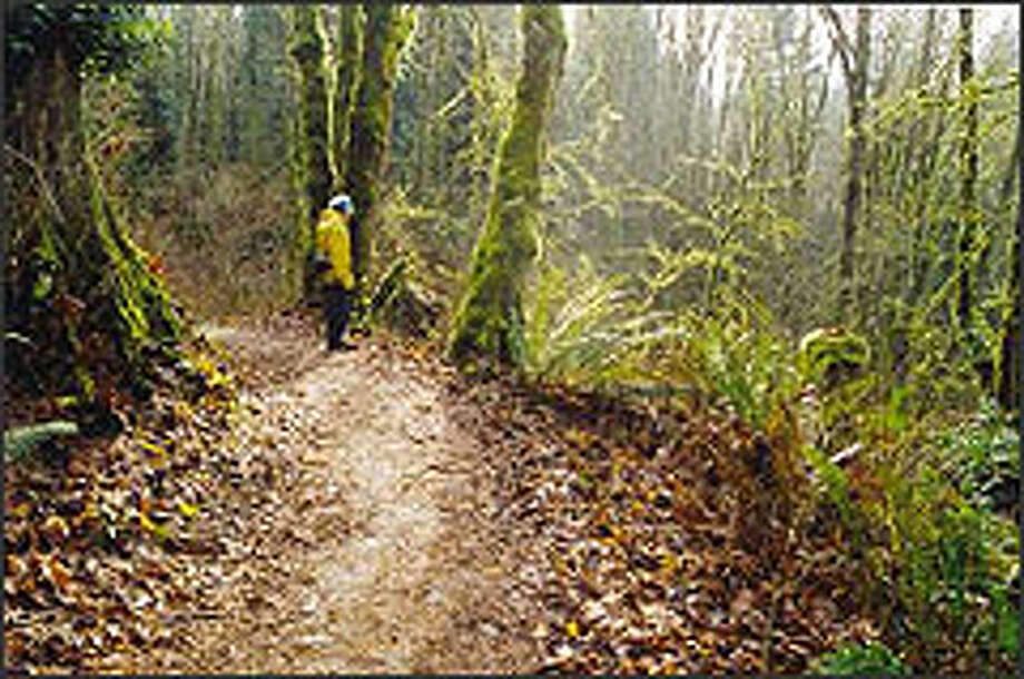 On winter weekdays, solitude can be found in the Redmond Watershed Preserve. Some of the 800-acre park's trails are for hikers only, while others accommodate mountain bikers and horseback riders as well as those on foot. Photo: KAREN SYKES