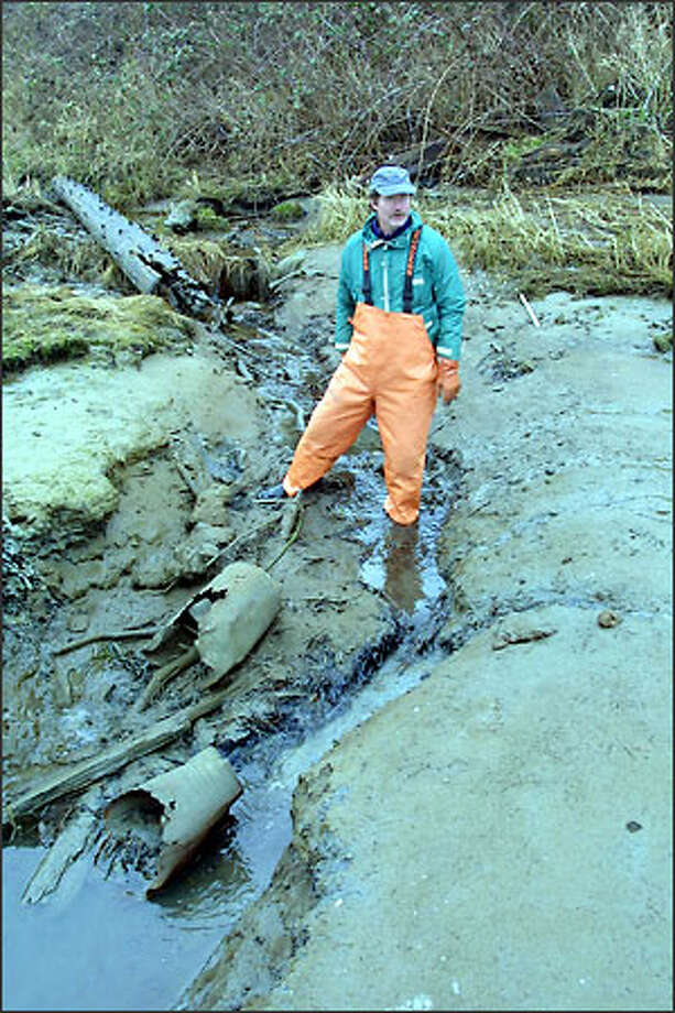 Geoff Menzies steps into the sludge from a storm runoff drain pouring into Drayton Harbor in Whatcom County. Photo: DAN LEVINE/SPECIAL TO THE P-I
