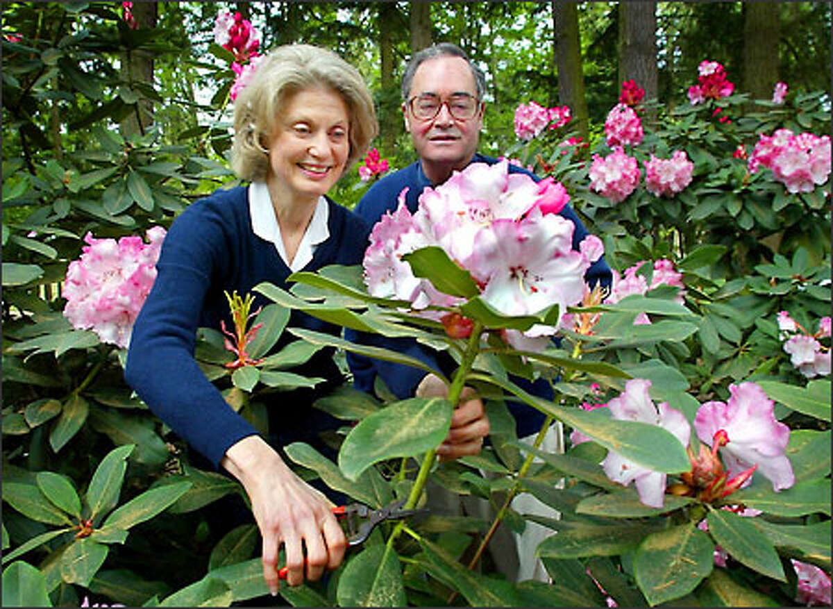 Dianne Bell and Cecil Bell Jr. owners of The Rhododendron Garden a nursery in Federal Way specializing in rhodies.