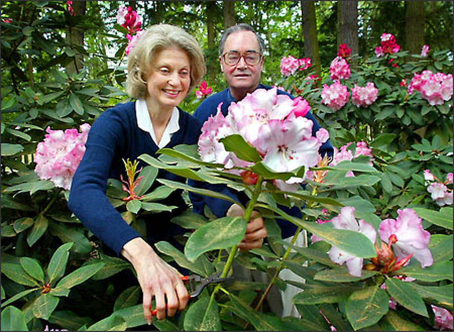 Dianne Bell and Cecil Bell Jr. owners of The Rhododendron Garden a nursery in Federal Way specializing in rhodies. Photo: Gilbert W. Arias/Seattle Post-Intelligencer