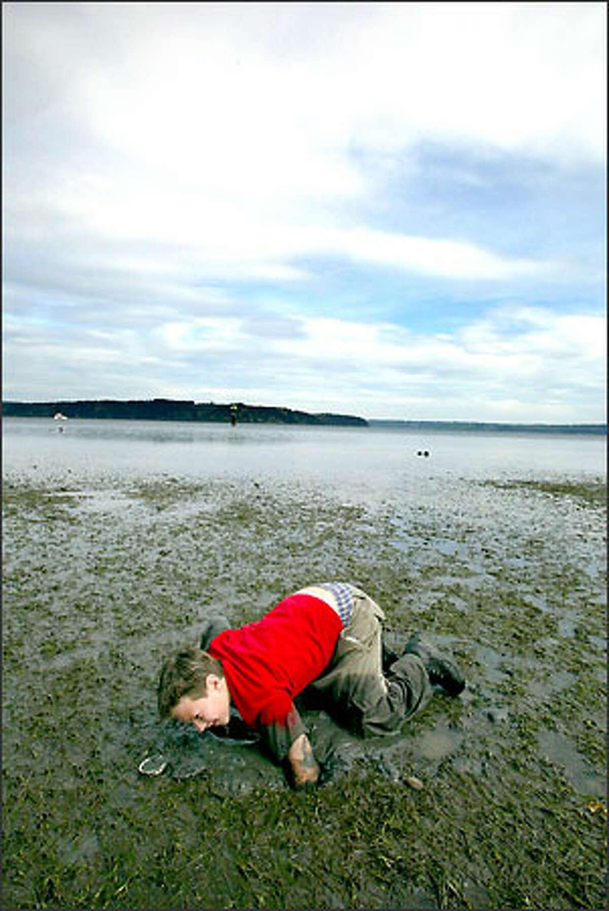 Jasper Hendricks, 11, of Brinnon, digs for geoducks on the tideflats at Dosewallips State Park.