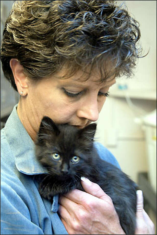 Seattle animal control officer Lisa Hawthorne holds Peanut, a kitten that was catnapped out of the arms of a woman that was thinking about adopting him. Photo: Phil H. Webber/Seattle Post-Intelligencer