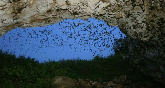 Some of the estimated 1.5 million Mexican free-tailed bats leave the Frio Cave near Uvalde, in 2007. (PHOTO BY EDWARD A. ORNELAS/STAFF) Photo: EDWARD A. ORNELAS, Edward A. Ornelas/Express-News / SAN ANTONIO EXPRESS-NEWS