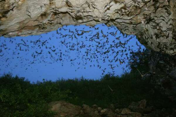 FOR METRO - Some of the estimated 1.5 million Mexican free-tailed bats leave the Frio Cave near Uvalde, Tx. Wednesday Aug. 8, 2007. WITH ANASTASIA STORY.(PHOTO BY EDWARD A. ORNELAS/STAFF)