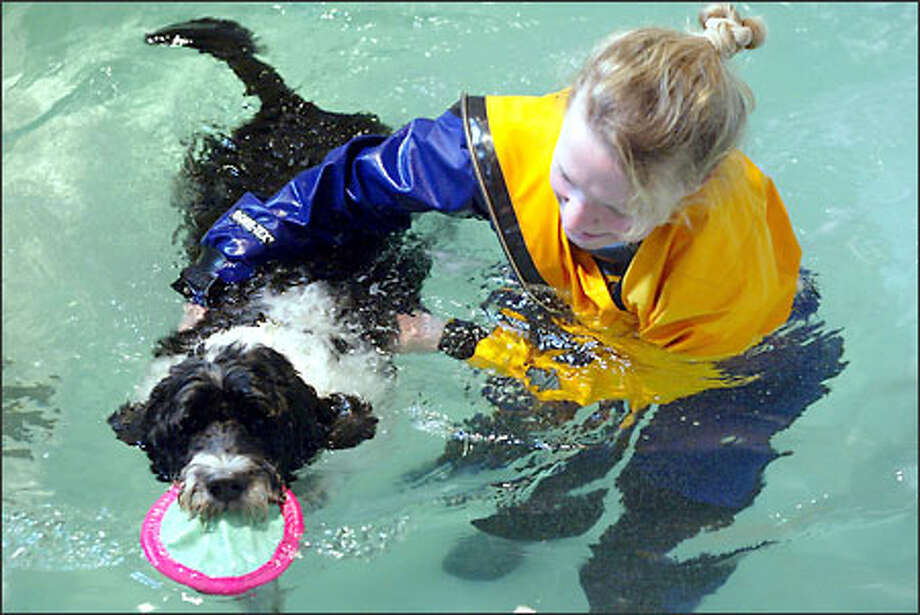 Canine hydrotherapist Sheila Wells works with Sancho, a 8-year-old Portuguese water dog, during a swim therapy session in her West Seattle pool. Photo: Phil H. Webber/Seattle Post-Intelligencer