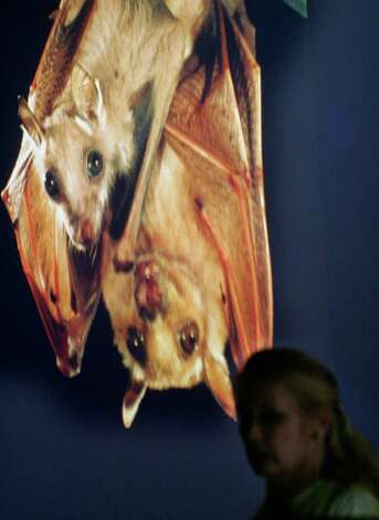 Local bat expert Kim Hoskins gives a presentation on bats hosted by the Bexar Audubon Socitety at Trinity University in 2008. Photo: J. MICHAEL SHORT, Express-News / SAN ANTONIO EXPRESS-NEWS