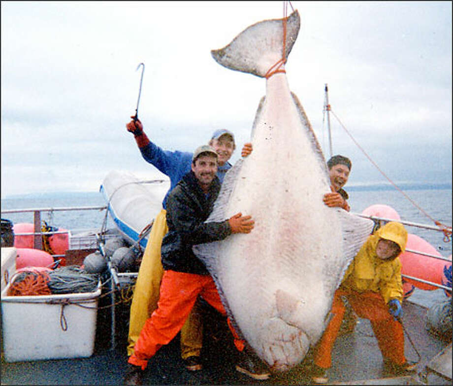 "Crew members of the Miss Mary, from left, captain Pat Davis, Barry Davis, and crewmen ""Aki"" and ""The Kid,"" got this halibut in the Bering Sea. Photo: / Associated Press"