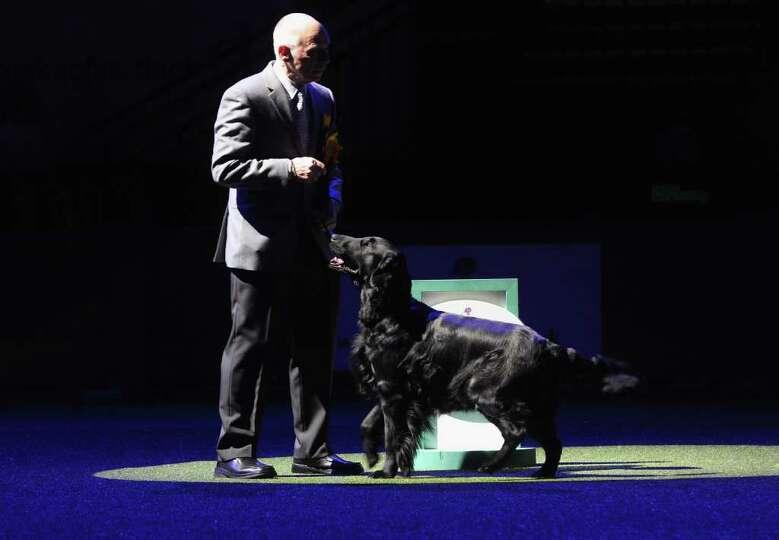 BIRMINGHAM, ENGLAND - MARCH 13:  Jet, a Flatcoated Retriever dog and handler Jim Irvine wait prior t