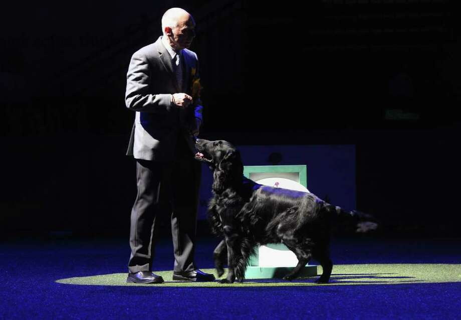 BIRMINGHAM, ENGLAND - MARCH 13:  Jet, a Flatcoated Retriever dog and handler Jim Irvine wait prior to winning 'Best in Show' at the 2011 Crufts dog show at the National Exhibition Centre on March 13, 2011 in Birmingham, England. Crufts, the world's largest dog show which marks 120 years this year, attracts nearly 22,000 dogs who vie for a variety of accolades, ultimately seeking the coveted 'Best In Show'.  (Photo by Oli Scarff/Getty Images) Photo: Oli Scarff