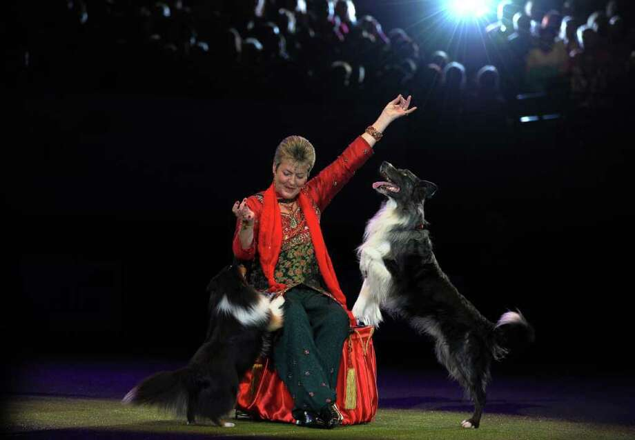 "Mary Ray, a dog trainer performs heelwork to music before the annoucement of  'Best in Show' at the annual Crufts dog show at the National Exhibition Centre in Birmingham, central England, on March 13, 2011. The annual event sees dog breeders from around the world compete in a number of competitions with one dog going on to win the ""Best in Show"" category. AFP PHOTO/PAUL ELLIS (Photo credit should read PAUL ELLIS/AFP/Getty Images) Photo: PAUL ELLIS"