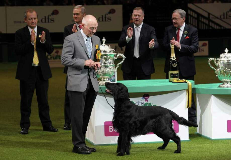 "Jet, a Flatcoated Retriever and breeder Jim Irvine from South Queensferry, Scotland is awarded 'Best in Show' after earlier winning the Best Gundog category at the annual Crufts dog show at the National Exhibition Centre in Birmingham, central England, on March 13, 2011. The annual event sees dog breeders from around the world compete in a number of competitions with one dog going on to win the ""Best in Show"" category. AFP PHOTO/PAUL ELLIS (Photo credit should read PAUL ELLIS/AFP/Getty Images) Photo: PAUL ELLIS"