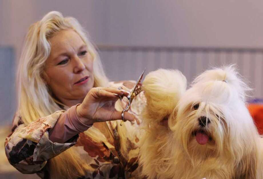 BIRMINGHAM, ENGLAND - MARCH 13:  Marion Radstock trims the hair on a paw of her Lhasa Apso dog before it is judged on the final day of the annual Crufts dog show at the National Exhibition Centre on March 13, 2011 in Birmingham, England. During this year's four-day competition nearly 22,000 dogs and their owners will vie for a variety of accolades, ultimately seeking the coveted 'Best In Show'.  (Photo by Oli Scarff/Getty Images) Photo: Oli Scarff