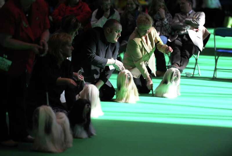 Owners hold their Lhasa Apso dogs during judging on the final day of the annual Crufts dog show at t