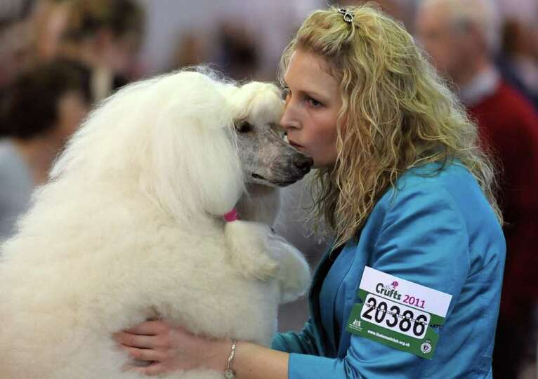 A woman kisses a Standard Poodle on the final day of the annual Crufts dog show at the National Exhi