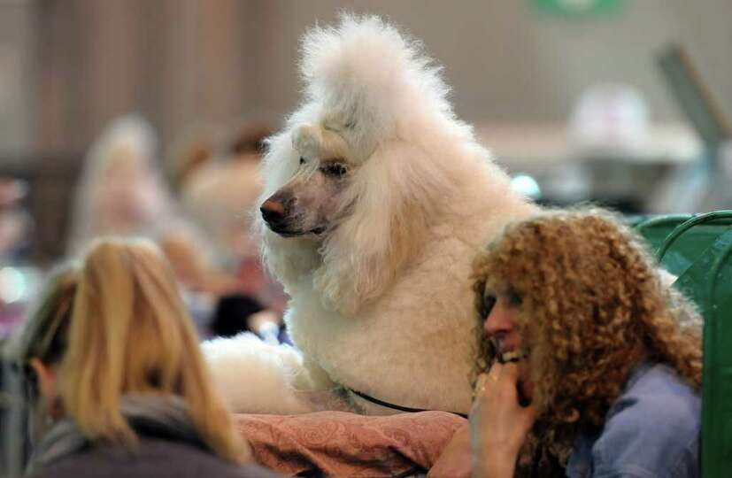 Women sit with a Standard poodle on the final day of the annual Crufts dog show at the National Exhi
