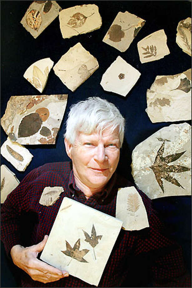 For Wes Wehr, artist and paleontologist at the Burke Museum, fossils' artistic nature has long kept him collecting and heavily influences his painting. Photo: Dan DeLong/Seattle Post-Intelligencer