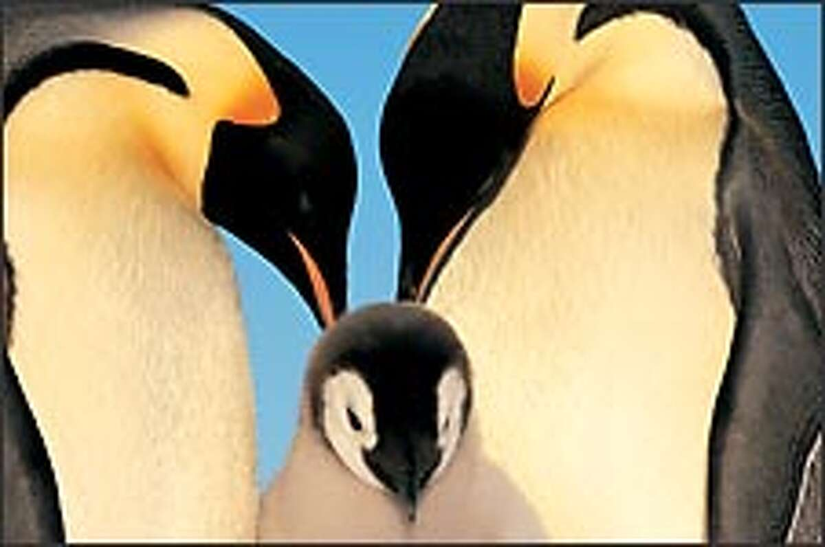 A pair of emperor penguins and their chick are captured in a family portrait.