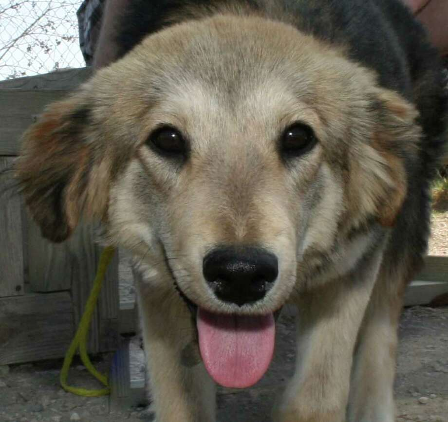 Lucy, a mixed-breed retriver puppy, is available for adoption.