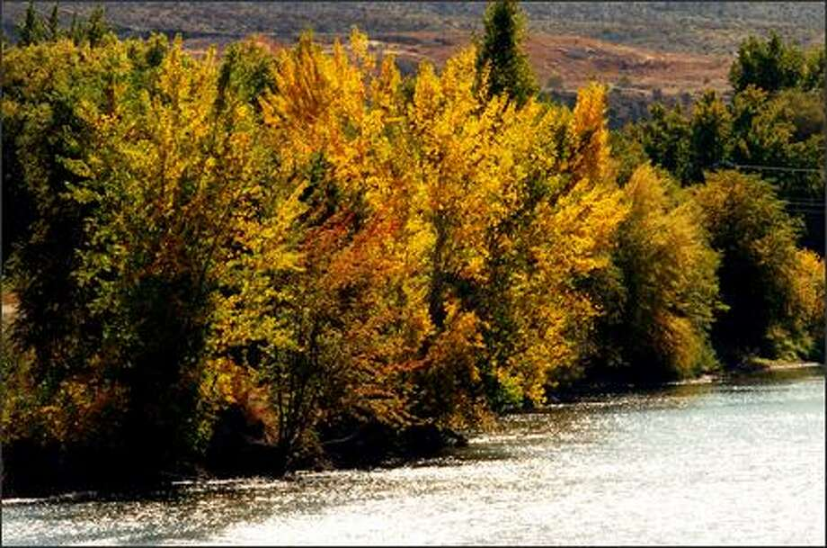 The scenic Okanogan River slices through downtown Omak and nurtures the colorful fall foliage that lines the river this time of year. Photo: Jeff Larsen/Seattle Post-Intelligencer