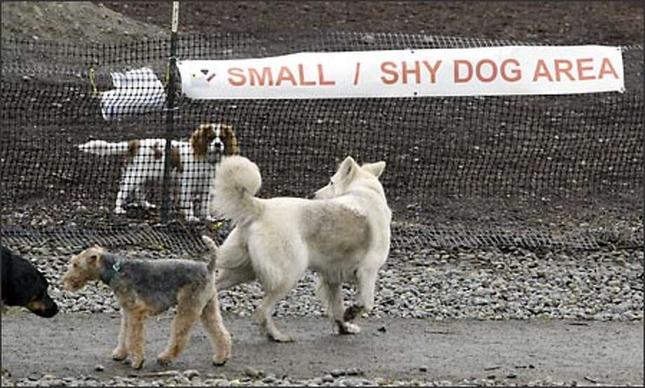 A spaniel inside the safety of the small/shy dog section at Magnuson Park's off-leash area looks out at larger dogs. The citizens' group that oversees the North Seattle dog park had been lobbied for years to set up an area for smaller dogs. Photo: Jim Bryant/Seattle Post-Intelligencer