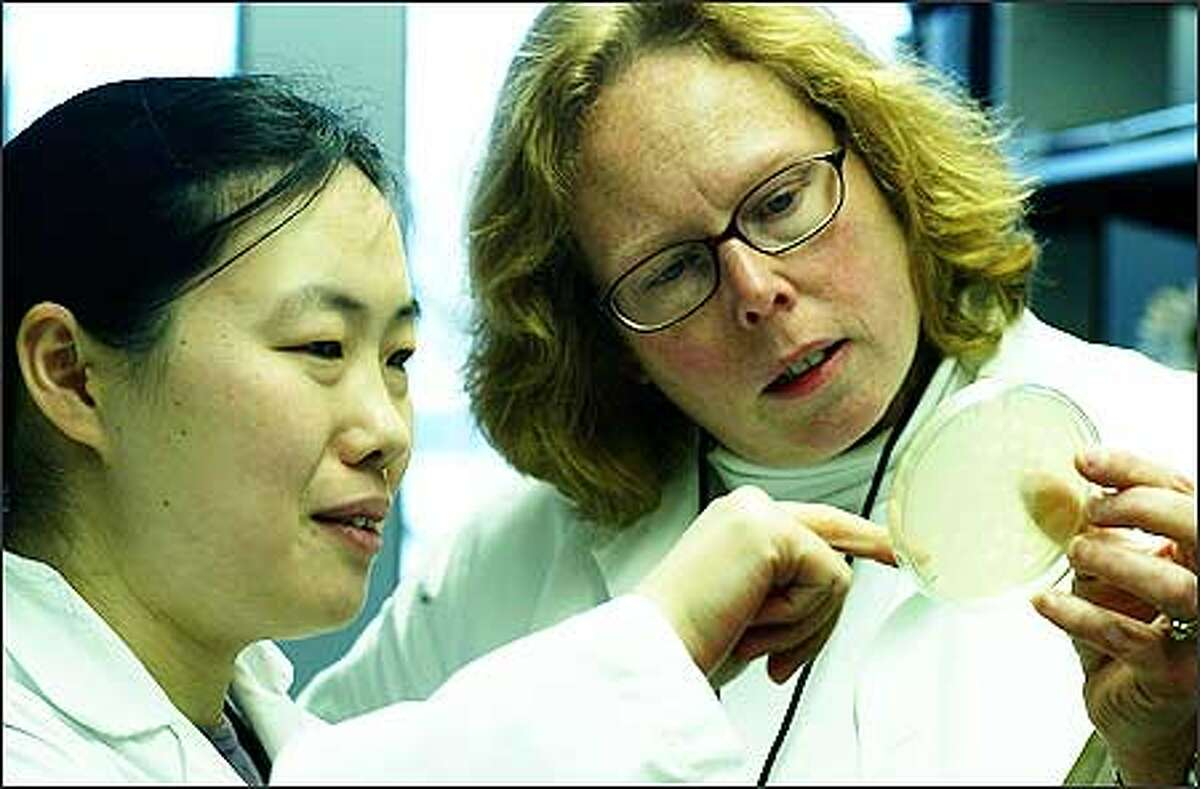 University of Washington cancer researcher Mary Disis, right, looks over a culture with Dr. Hailing Lu, a research scientist, in the tumor vaccine lab.