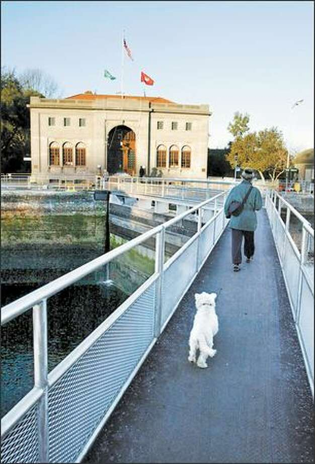 Kathy Gold walks Wilbur through the Ballard Locks, a National Civil Engineering Landmark. Photo: MERYL SCHENKER/P-I
