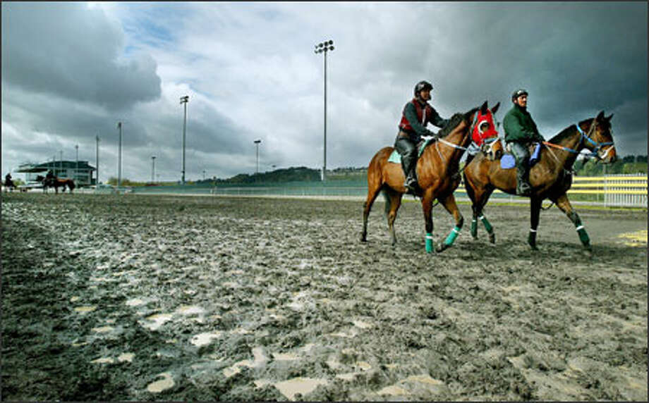 A pair of thoroughbreds are led down by the muddy track at Emerald Downs following an early morning training session. The track kicks off its 10th season of racing tonight. Photo: Paul Joseph Brown/Seattle Post-Intelligencer