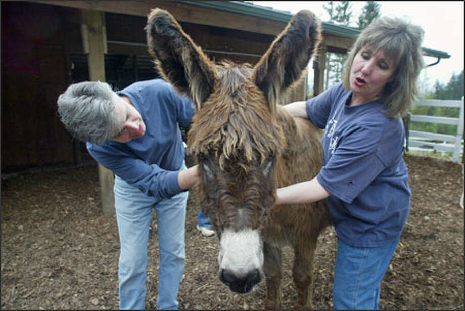 Susan Michaels and Mark Steinway, petting Babs, a rescued donkey, have been fighting for legislation to strengthen animal rights in Washington. Photo: Karen Ducey/Seattle Post-Intelligencer