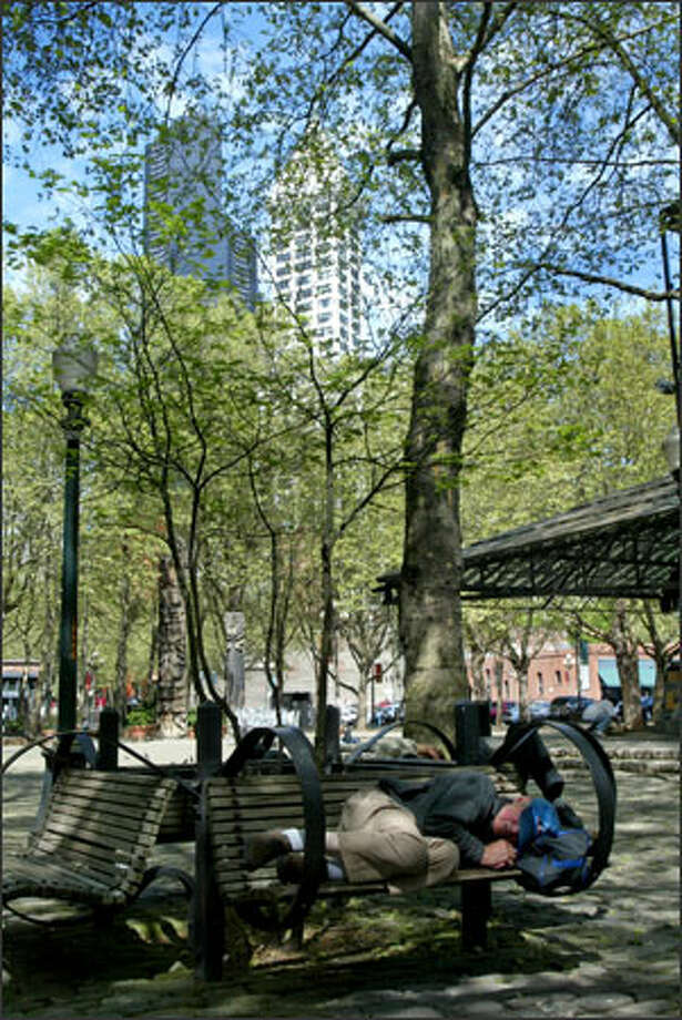 City plans for Occidental Park include cutting down trees and moving benches. Photo: Karen Ducey/Seattle Post-Intelligencer