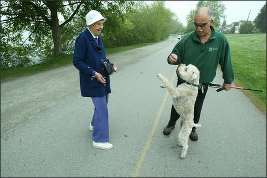 Doug Horton's Wheaton terrier, Maddy, does a little dance after Lee Dodge gives her a treat from her purse. Horton and Maddy regulary encounter Mrs. Dodge on walks around Green Lake, and both get treats, hard candy for Horton and a dog treat for Maddy. Photo: PAUL JOSEPH BROWN/P-I