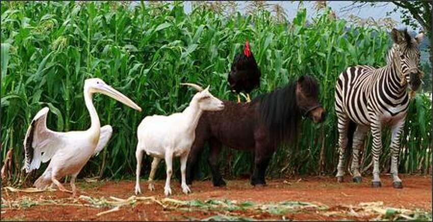Stripes (voiced by Frankie Muniz, right) grows up on the Walshes' Kentucky farm along with an oddball collection of animals -- voiced by an all-star cast -- that includes, from left, Goose the pelican (Joe Pantoliano), Franny the goat (Whoopi Goldberg), Reggie the rooster (Jeff Foxworthy) and Tucker the pony (Dustin Hoffman).