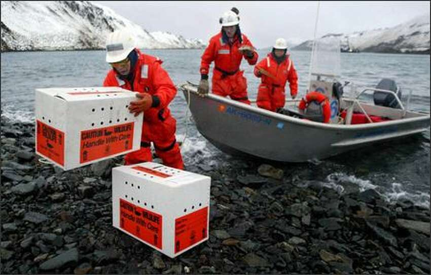 Cleanup worker Leon Balluta unloads boxes of oiled birds that were rescued by crew members aboard the Cape Flattery on Skan Bay near Dutch Harbor, Alaska.
