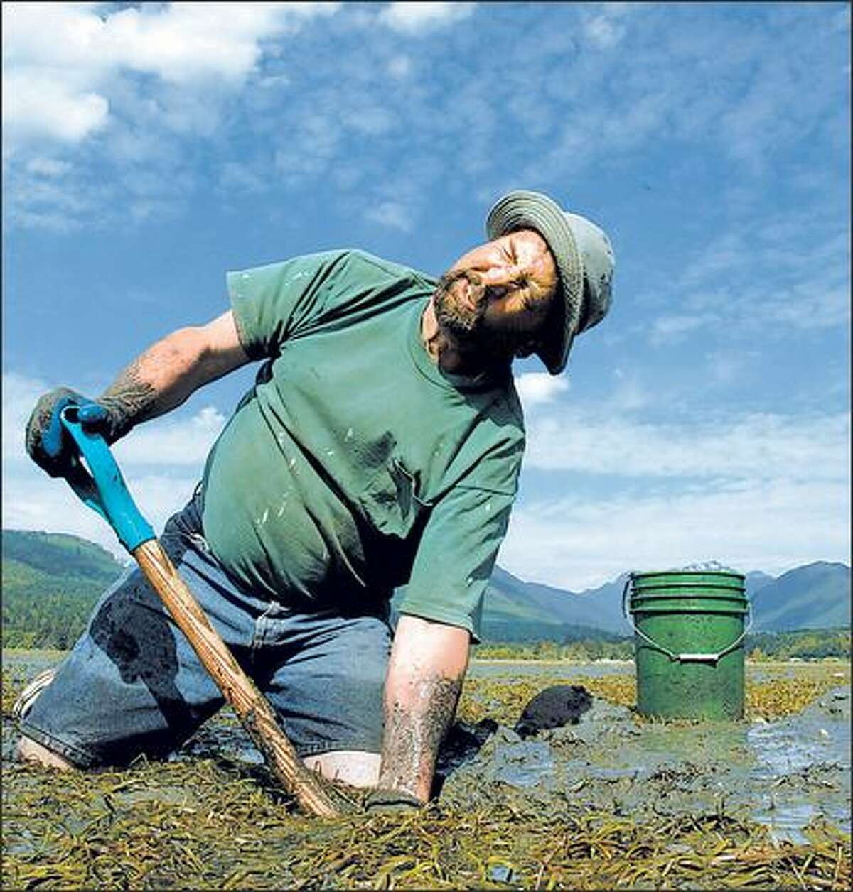 Jerry Strawn puts his all into digging for a geoduck in the Dosewallips State Park tideflats. Unfortunately, all that effort netted a relatively small clam.