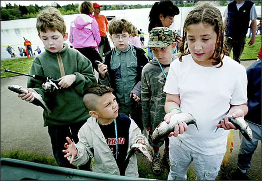Lucky anglers Maleo Shulda-Maui, 5, left, his cousin Kial McGaw, 9, and several newly minted anglers wait to have their trout cleaned by a Fishing Kids volunteer. For $5, kids ages 5-14 got a trout rod and reel, a T-shirt, a guide to techniques and other fishing goodies.Brown:This photo brings back childhood memories of catching lots of tiny perch on a lake in Vermont. Catching the fish was fun. But cleaning them was so unpleasant that the sum of the experience was decidedly negative. Photo: Paul Joseph Brown, Seattle Post-Intelligencer