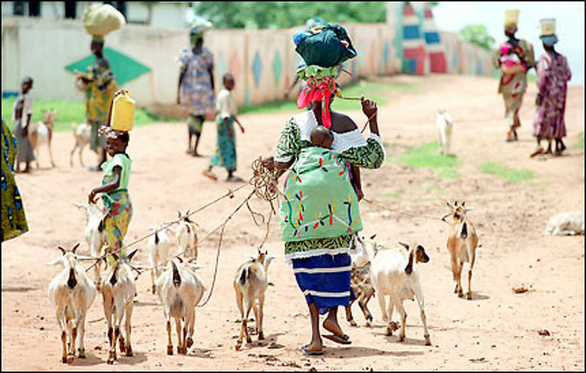 With a child on her back and goats in tow, a woman in Garawol, Gambia, carries food to the fields on her head. Gambia has immunized more than 90 percent of its children against the six basic childhood diseases.