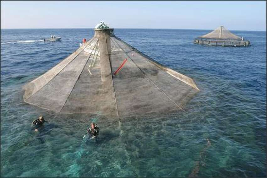 Kona Blue Water Farms grows Kona Kampachi (or Seriola rivoliana) in cages called Sea Stations, which are raised above water during harvest. Normally, the cages are fully submerged.