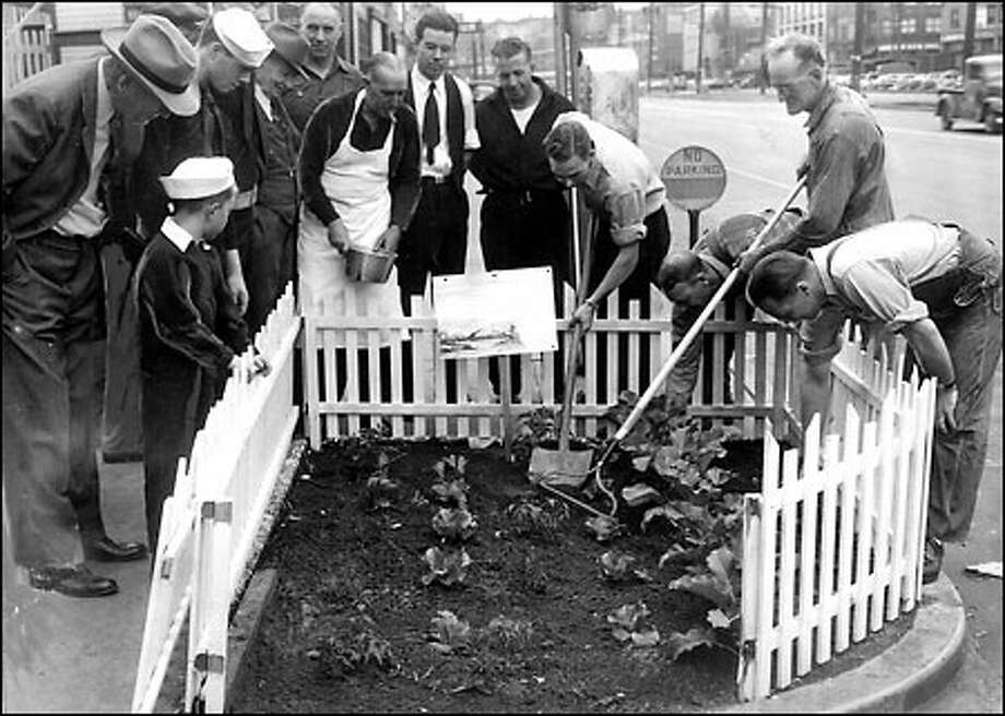 A verdant Victory Garden, 1944: Firemen from the fireboat station at the foot of Madison Street tend their tiny but productive Victory Garden to support the war effort in July 1944 as local workers and bypassers gather 'round to watch. The firemen's secret to growing large, tender vegetables was to fertilize the soil with dead fish. Photo: Seattle Post-Intelligencer