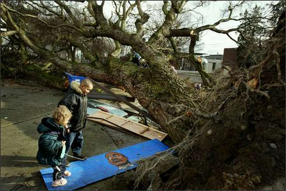 Ivan Ginyard, 9, and his sister J-Lee Craven, 3, look at the smashed bus stop - and portrait of Martin Luther King - at the intersection of Yesler Way and Eighth Avenue South in front of the Yessler Terrace Apartments on Friday. No one was injured when the giant tree came crashing down. It also landed on a car. Residents of the low income housing project said the loss of this tree would change the whole neighborhood.