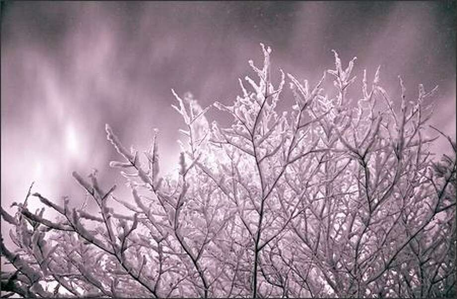 Here's a picture I shot Wednesday morning. It was shot using an infrared filter right as the sun was rising in my front yard down here in Olympia. Enjoy! (Paul Marsh )