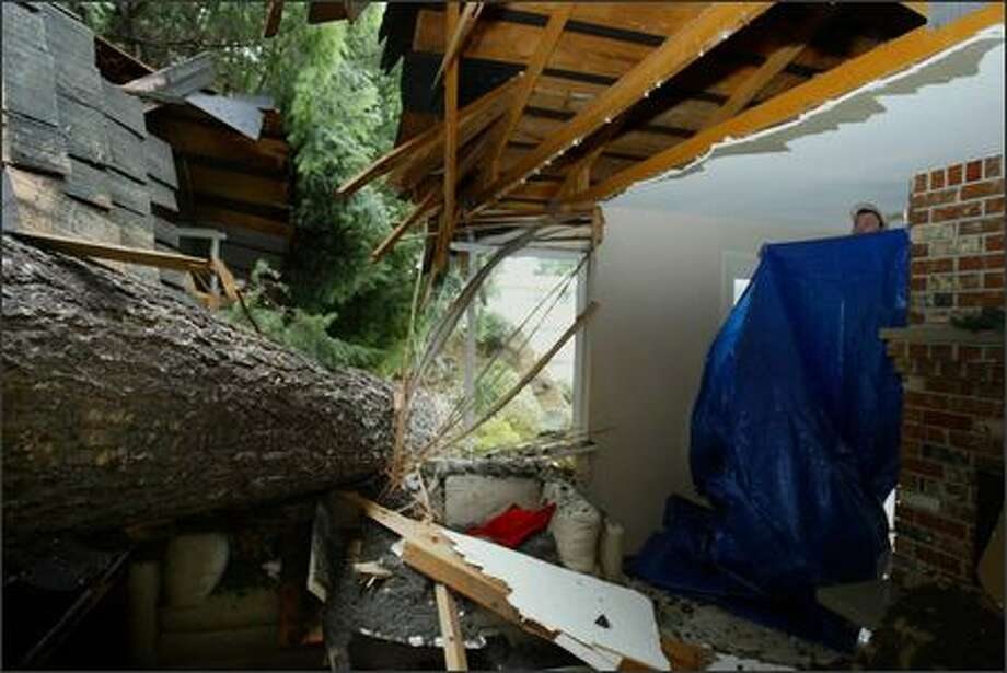 Ryan Schuehle puts up a tarp on Friday to separate the living room from the rest of this parents house in Newport Hills after a fir tree crashed through the living room. His parents had gone to stay at a hotel, fearful that a tree could come down, and were not home at the time. Seattle Post-Intelligencer/Meryl Schenker