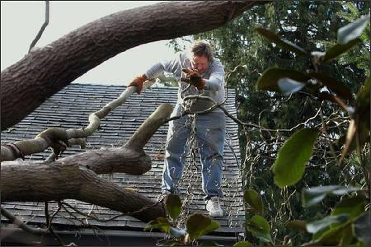 Doug Sisson of West Seattle is not falling off his roof. He is dropping branches of a corkscrew willow that fell on his house on December 15, 2006. Seattle Post-Intelligencer/Meryl Schenker
