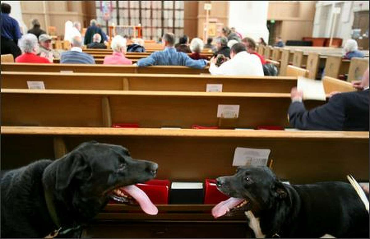These two early arrivals wait at St. Mark's Cathedral for the Blessing of the Animals to begin.