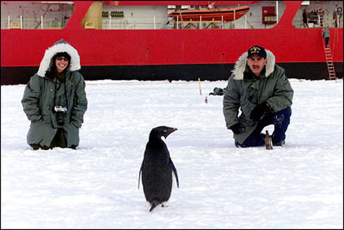 On ice liberty from the USCGC Polar Star for New Year's Eve, Seaman Shelley Dixon,left, and Boatswain Mate 1st Class Wesley Pannett try to talk to a penguin.