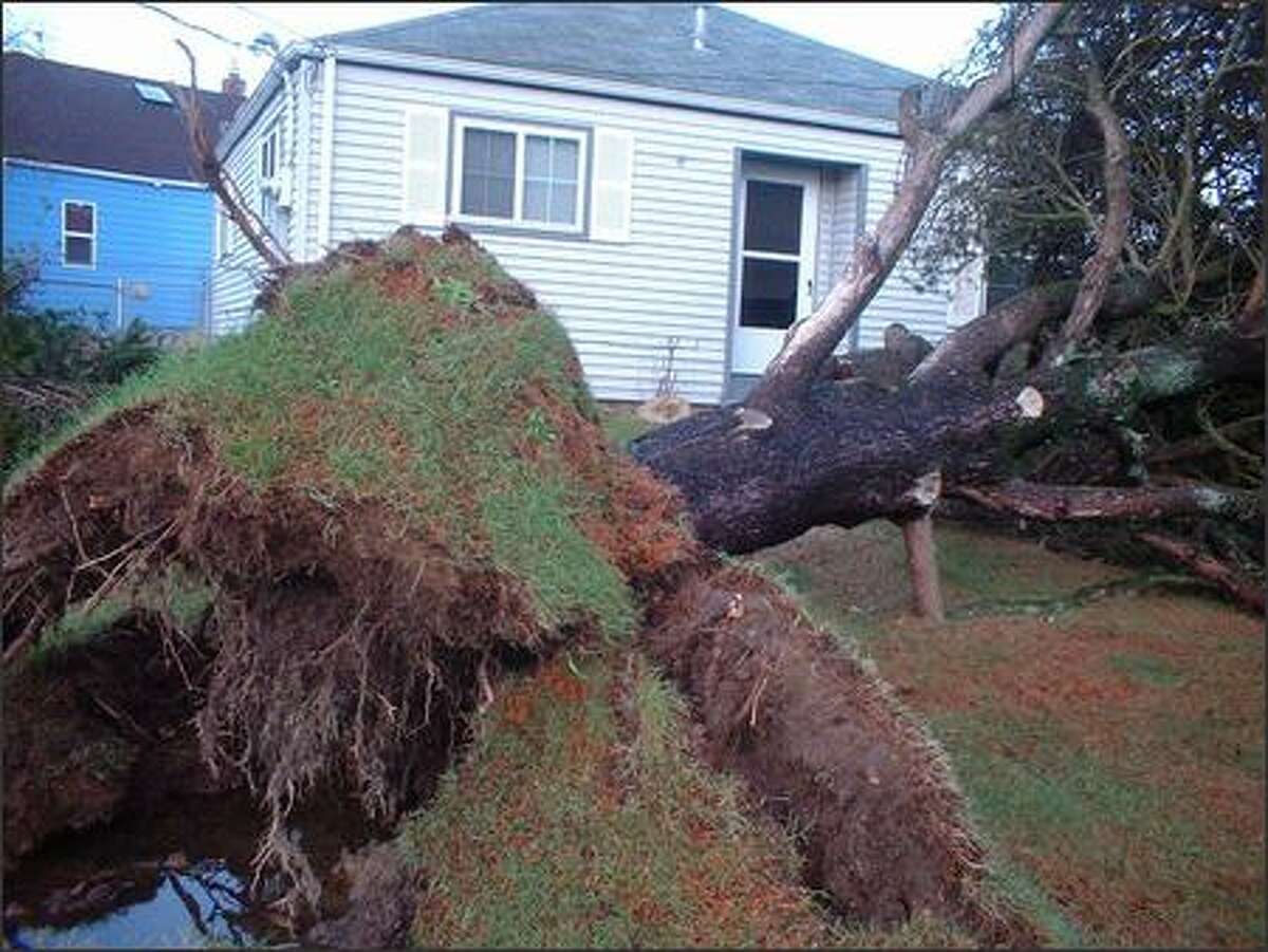 An uprooted tree lies in the front yard of a house in Tacoma. (Submitted by Jeff Long)